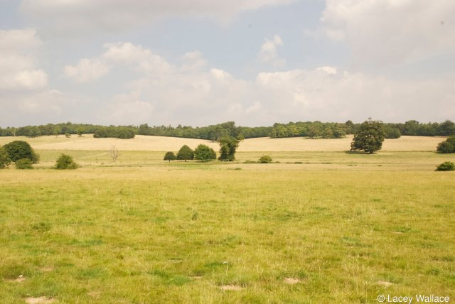 The site in foreground looking NE. The Nailbourne in middle foreground with the line of trees masking numerous barrows and the Roman Road from Canterbury to Dover